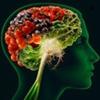 Beynin fəaliyyətini göstərən texnika icad edilib