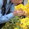 Qoxu duyğusunun azalması ölüm riskini artıra bilər